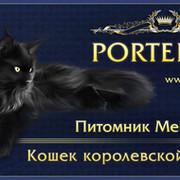 Продажа котят. Питомник мейн-кун PORTER*RU группа в Моем Мире.