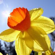 Цветок Весны on My World.