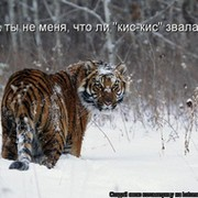 Сергей Казиев on My World.