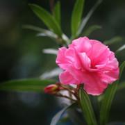 Олег Илюнгин on My World.