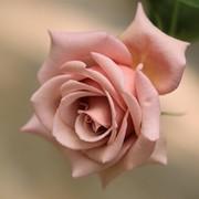 Inna Gavrichkova on My World.