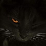 МИХАИЛ СОЛОДКОВ on My World.