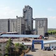 Саракташский элеватор оренбургская область транспортер для погрузки дров своими руками